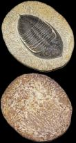 London Coins : A168 : Lot 1018 : Fossilised items (2) trilobite type and Orthoceras a standing assemblage, excellent condition